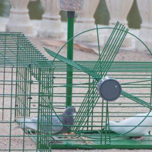 Jaula Trampa Selectiva Palomas y otras Aves
