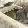 bebedero hormigon conejos