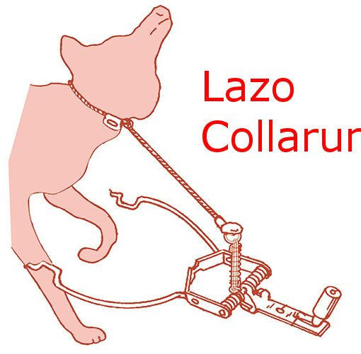 Lazo collarum